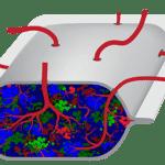 Stem cells inside PEC-Direct